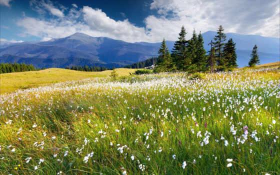 cvety, горы, priroda