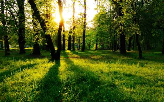 разных, разрешениях, лес