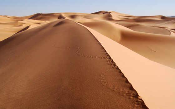 пустыня, пустыни, sands, сахара, лошадь, песок, красивые, running, крупным, планом,