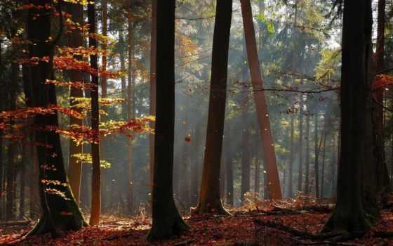 бору, сосновом, природа, закат, заката, fone, осень, лес, trees, красивые,
