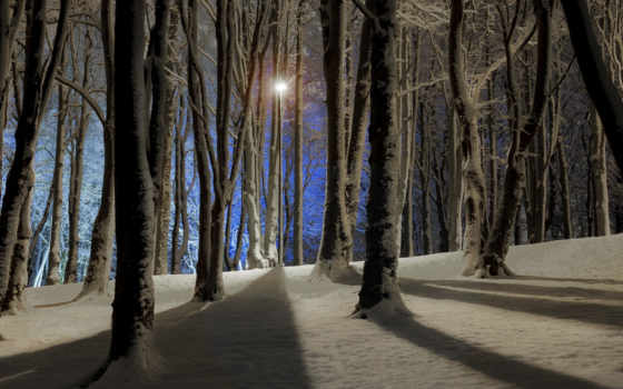 invierno, noche, bosque, nieve, del, paisajes, naturaleza, rboles, fondos,