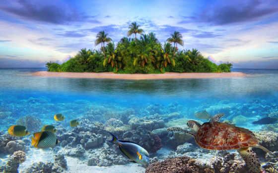 fonds, мер, ecran, tortue, fond, paysage, tortues, poissons, sur,