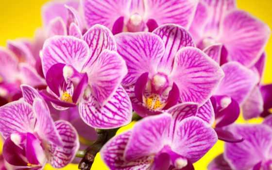 flowers, цветы, фотопечатью, high, summer, роза, definition, лепестки, vguzun, природа,