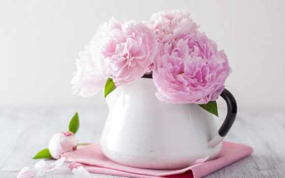 пионы, вазе, розовые, букет, cvety, пион, красивый, розовый, картинка, белой, стоковые,