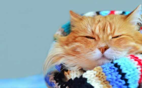 кот, фотообои, шарфе