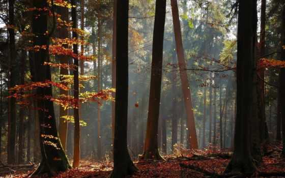 лес, осень, природа, листья, пасть, дерево, trees, landscapes, sunlight, rays,