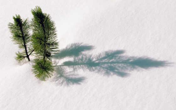 дерево, fir, снег, первую, twigs, елка, winter,