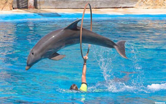 дельфинов, дельфины, дельфин, животных, водой, красивые, под, прыгают, показать, следы, морские,