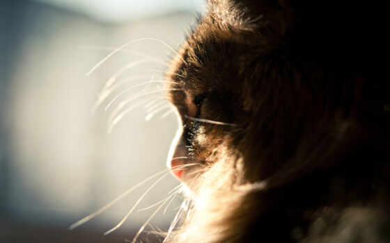 кот, animal, gato, морда, пушистый, спать, день, котенок, который, profile