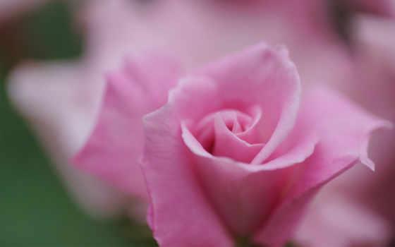 Цветы 25518