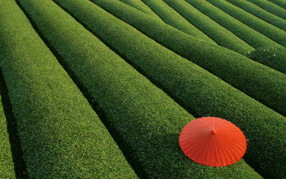 японии, природа, чайные,