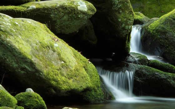 water, мох, картинка