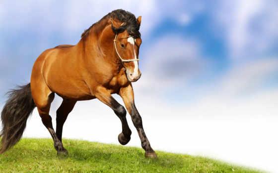 фотообои, лошадь, cvety