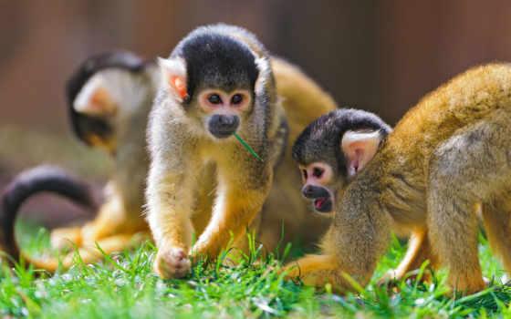 обезьяны, zhivotnye