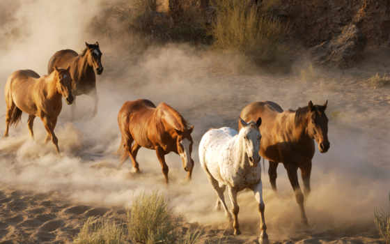 лошади, лошадь, selfmadetrip, бежать, zhivotnye, природа, пыль, трава, стадо, кони, небо,
