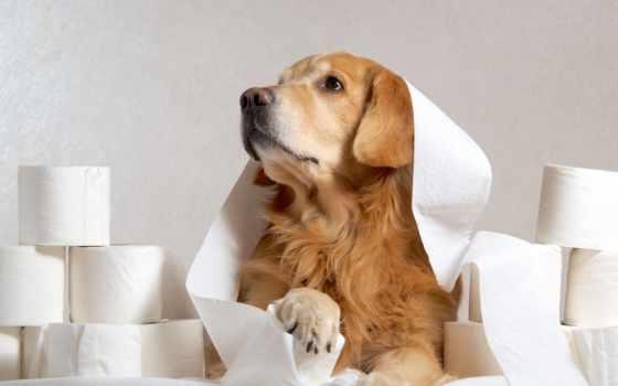 perros, papel, собака, об, поезд, learning, использование, унитаз, правда,