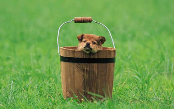 пост, собака, images, user, dogs, pinterest, ковш, quoteschart,