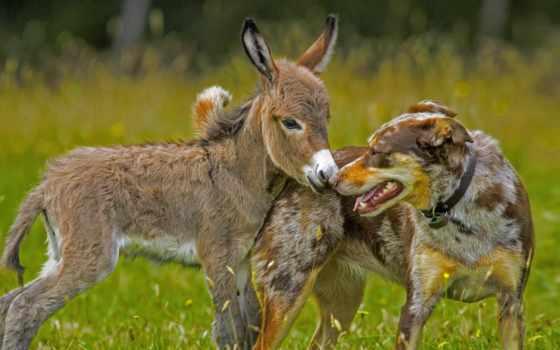 baby, donkey, собака, donkeys, дружба, photography, фото,