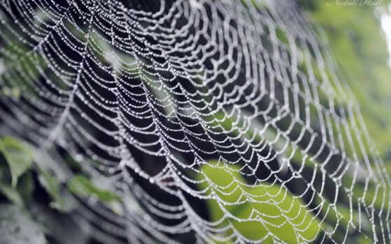паутинка и роса