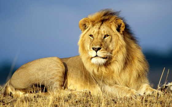других, львы, львів