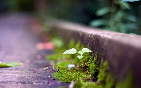 есть, dream, desire, сквозь, асфальт, even, прорастете, настойчивость,