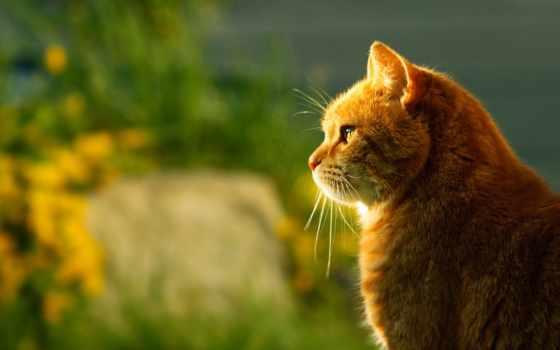 кот, profile, коты