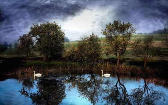 лебеди, тучи, trees, пруд, фотографий, воде, небо, плавают, лебедя, два, swans,