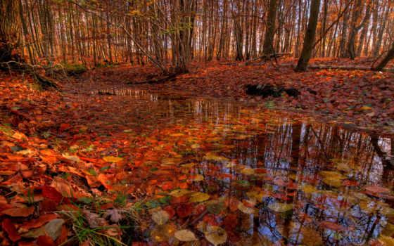 осень, лес, trees, ручей, листва, лесу, time, года, река, банка,