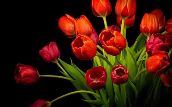 feliz, цветы, красивые, viernes, que, dios, июл, gracias, amor, ми, por,