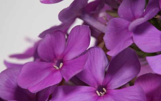 flowers, цветы, full, выбор, сиреневый, часы, футажи, asos, букет,