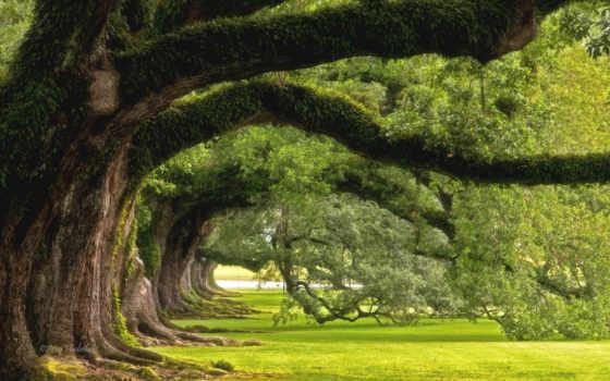 красавица, images, getty, дуб, stock, simple, photos, дерево, pictures, live,