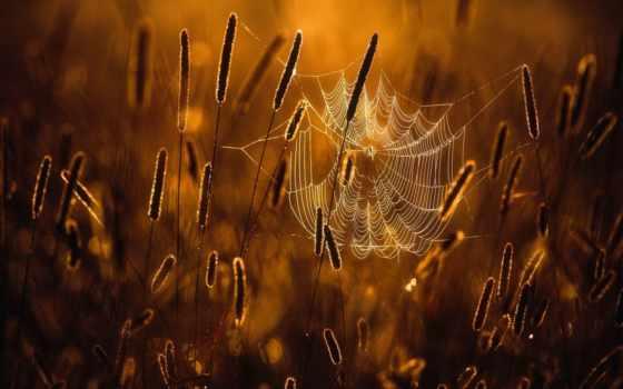 web, лес, осенью, осень, осени, charmed, осенние, joni, вестники, niemelä,