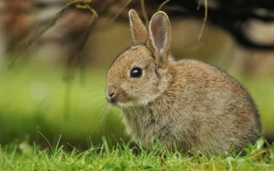 кролик, ultra, bunny