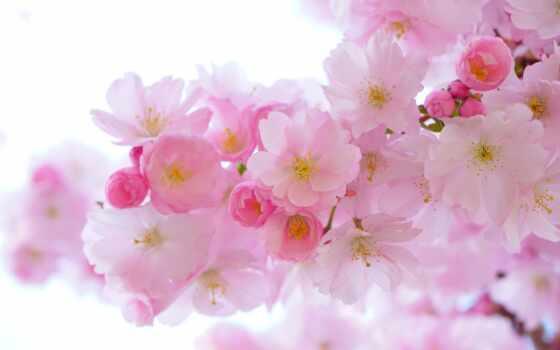 цветы, книга, красивый, розовый, салон, jewelry, сеть, gold, gentle