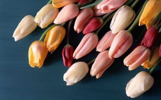 марта, тюльпаны, свой