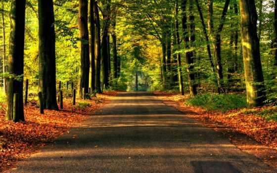 дорога, лес, деревя