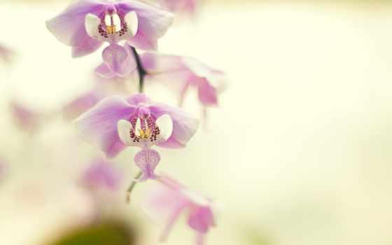 орхидея, iphone, desktop, tochka, oboi, цветы,