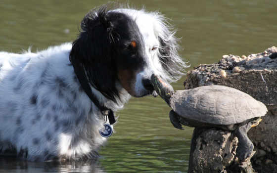 собака, черепаха, друзья, кот, игры, мыши, черепахи, поцелуй, pad, fashion, женская,
