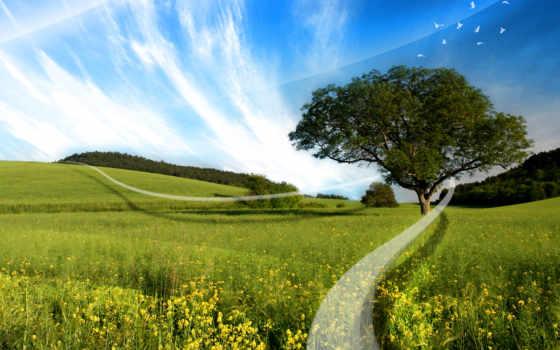 природа, коллекция, mobile, лес, пожаловаться, subscribe, unsubscribe, подписчики,