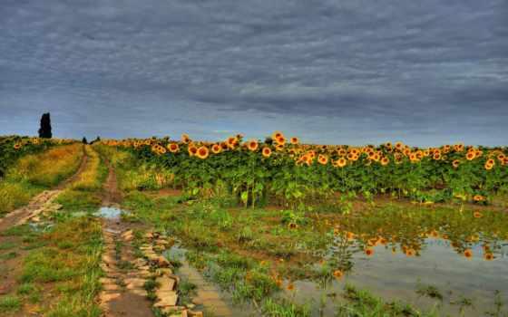 поле, дорога, подсолнухи, тучи, природа,