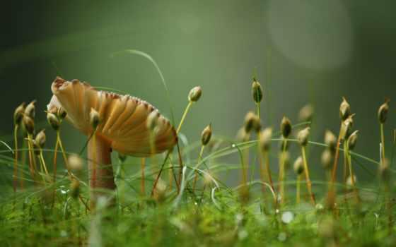 макро, flowers, mushroom, другие, качество, free, собранный, fonwall, природа