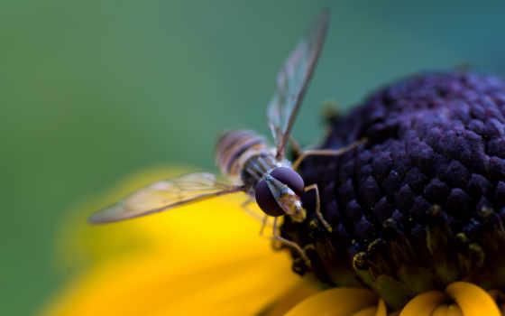 макро, free, телефон, kartinik, цветы, насекомое, планшетный, ноутбук, пчелка, android