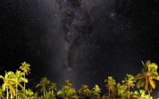 дерево, palm, небо, тег, семья, fond, ночь, ecran, starry