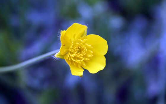 желтый, синий