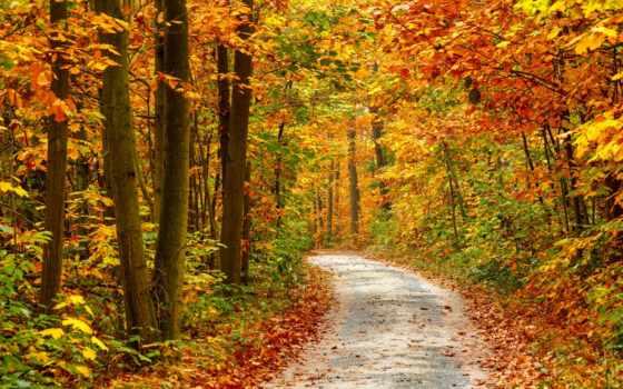 priroda, природа, листья