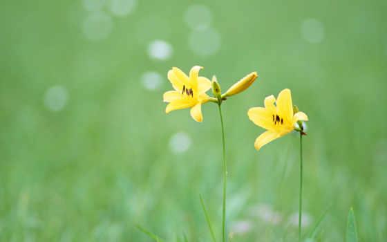 cvety, полевые, wild