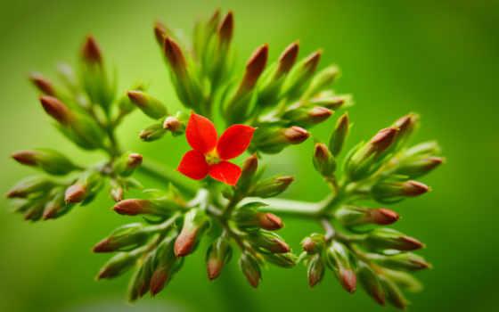 red, цветы, зелёный