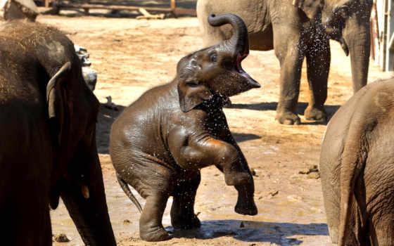 радость, слон, water