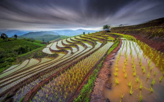 margin, рисовые, тайланде, смешные, анекдоты, путешествия, истории, thai,