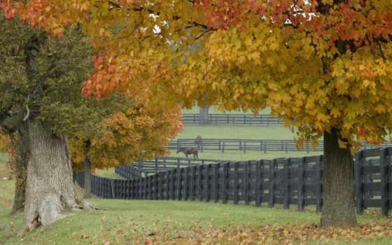 ферма, лошадиная, забор, game, trees, трава, осенней, листва, daler, листве,